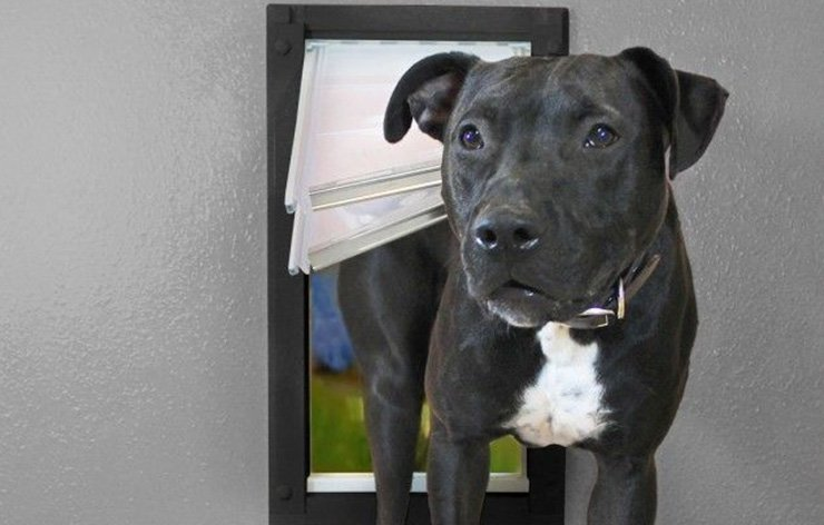 Black and white dog going inside home through a pet door | Demers Glass AZ